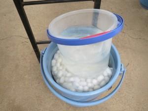 130403繭を水につけるweb3